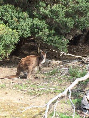 Kingscote, Australien: photo1.jpg