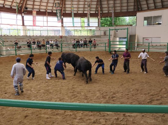 Oki Momo Dome: bullfight