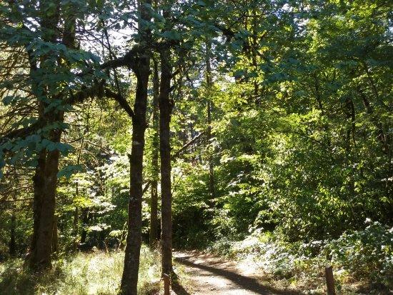 Corvallis, Oregón: Peavy Arboretum