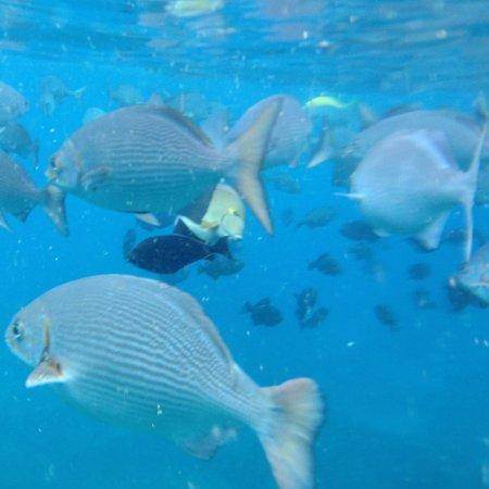 Kamuela, Havai: Fish