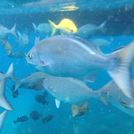 Kamuela, HI: More fish