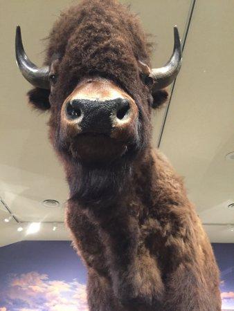 Cody, WY: Amazing Western Museum!