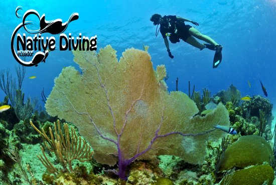 ‪Native Diving‬