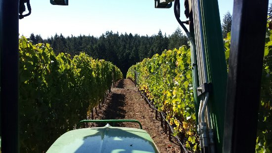 Yamhill, OR: Summit Wine Tours