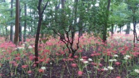 Matsudo, Japonya: 花園ですね。