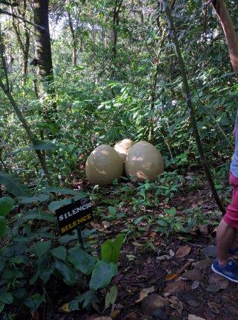 Rincon de La Vieja, Κόστα Ρίκα: Huevos
