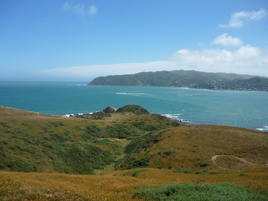 Porirua, Nueva Zelanda: We climbed up thetop ofthe hill to see the lovely view of the Harbour