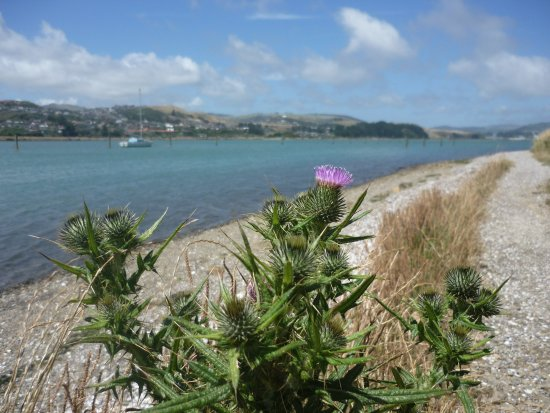 Porirua, นิวซีแลนด์: The lovely pebbly walkway along the Harbour
