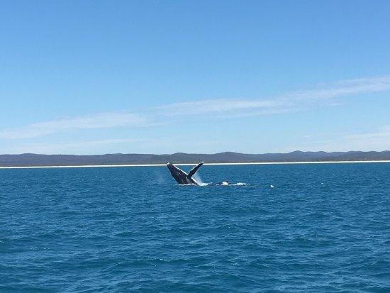 Hervey Bay, Avustralya: photo0.jpg