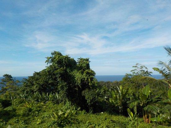 Isla Bastimentos Resmi