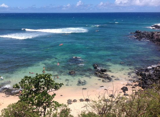 Paia, HI: From the upper parking lot, we could see 9 turtles on the beach