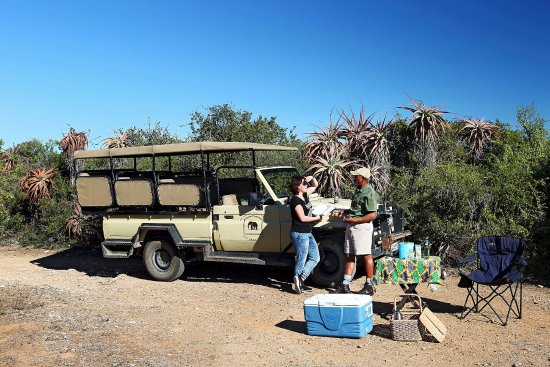 Game drive into nearby Addo Elephant National Park