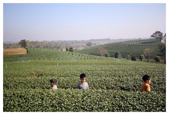 Mae Chan, Thaïlande : ไร่ชาสุดลูกลูกลูกหา สามารถลงมาเดินเล่นถ่ายภาพได้