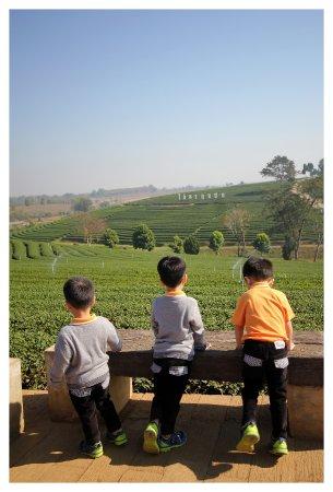Mae Chan, Tailandia: มุมถ่ายภาพสามารถเห็นป้ายไร่ชาฉุยฟงขนาดใหญ่