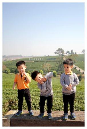 Mae Chan, Thaïlande : ป้ายไร่ชาฉุยฟง เป็นแลนด์มาร์คของที่นี่ที่ต้องแวะมาเก็บภาพ