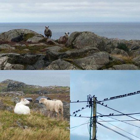 Utsira, Norge: Flotte turområder