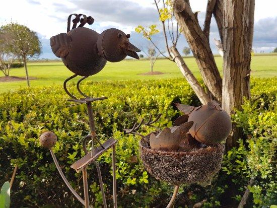 Lovedale, Avustralya: Garden