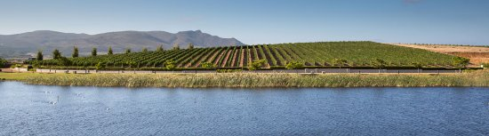 Benguela Cove Lagoon Wine Estate: getlstd_property_photo