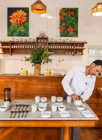Balipara, India: Tea Tasting