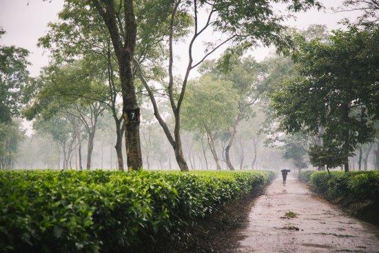 Wild Mahseer: Tea Garden
