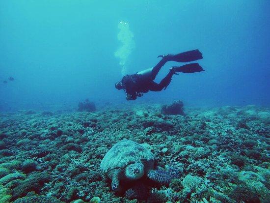 Foto manta dive gili air resort gili air tripadvisor - Manta dive gili air resort ...