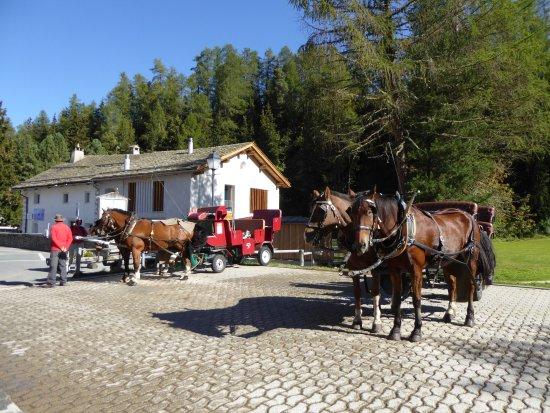 Sils im Engadin, Suiza: Lieu de départ des calèches pour le Val Fex