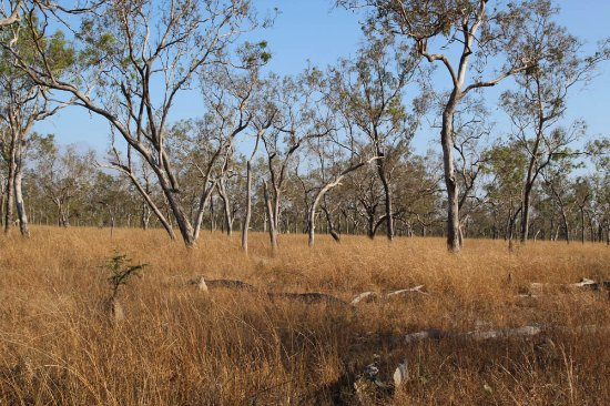 Jabiru Safari Lodge: Out on a self guided walk