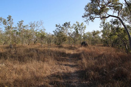Mareeba, Australia: Out on a self guided walk