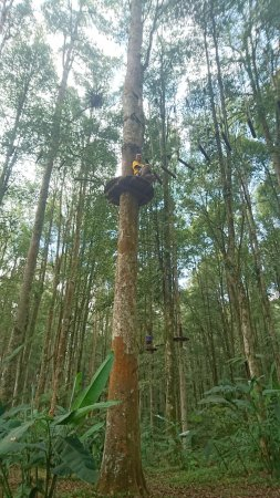 Bali Treetop Adventure Park: DSC_0288_large.jpg