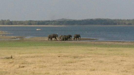 Habarana, Sri Lanka: DSC_0043_large.jpg