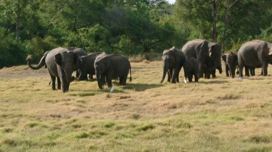 Habarana, Sri Lanka: DSC_0045_large.jpg