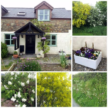 Llandysul, UK: There are some beautiful plants in the garden and hedgerows.