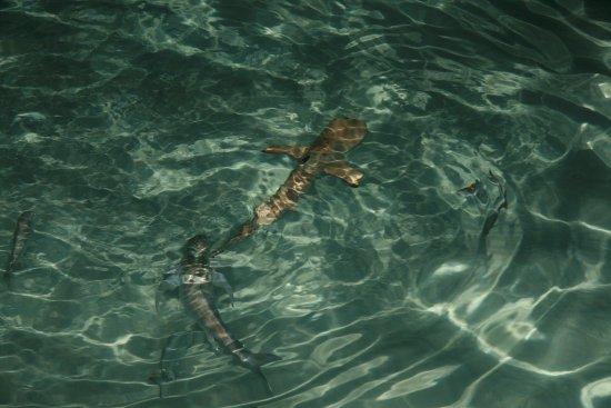 馬爾代夫笛古島安納塔拉度假酒店照片