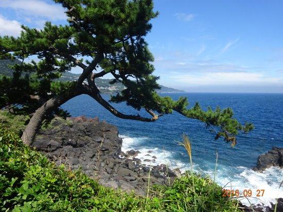 Jogasaki Beach Photo