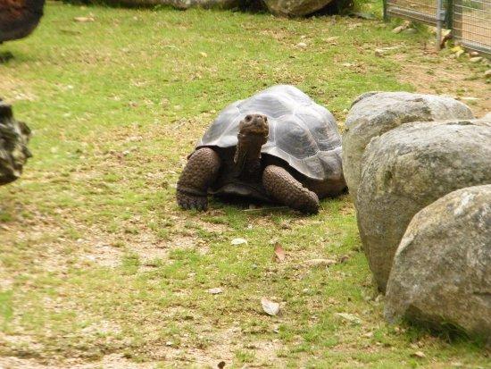 Trinity, UK: The Turtles