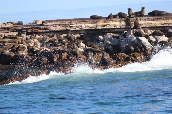 Гансбаай, Южная Африка: Shark Alley