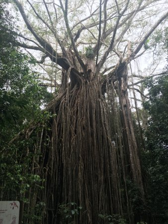 Curtain Fig National Park: Curtain fig...a must see.