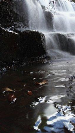 Deloraine, Austrália: Liffey Falls