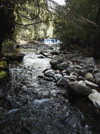 Deloraine, Australia: Liffey Falls