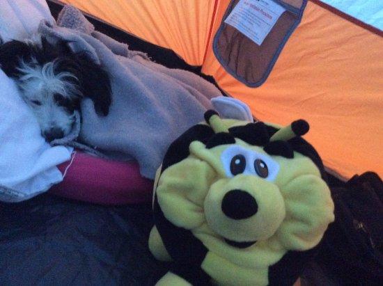 Gillside Camp Site And Caravan Park Snug As A Bug In Rug