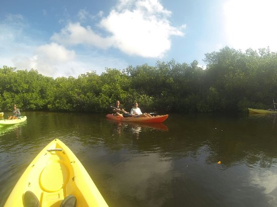 Kralendijk, Bonaire: Kajakken in de mangroves