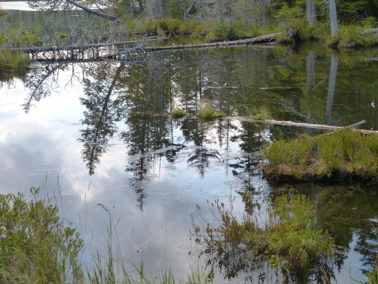 Millinocket, ME: One of the ponds along a trail.