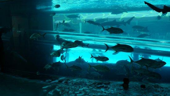 Golden Nugget Hotel: waterslide through the Shark-Tank