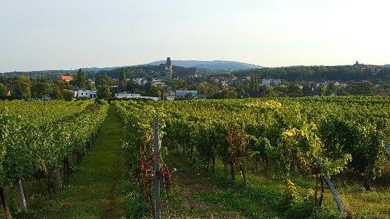 Perchtoldsdorf, Avusturya: Mohrenberger Alm II
