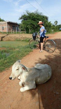 Μπαταμπάνγκ, Καμπότζη: OI000638_large.jpg