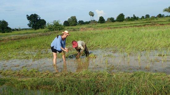 Μπαταμπάνγκ, Καμπότζη: OI000614_large.jpg
