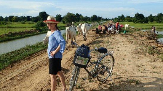 Μπαταμπάνγκ, Καμπότζη: OI000590_large.jpg