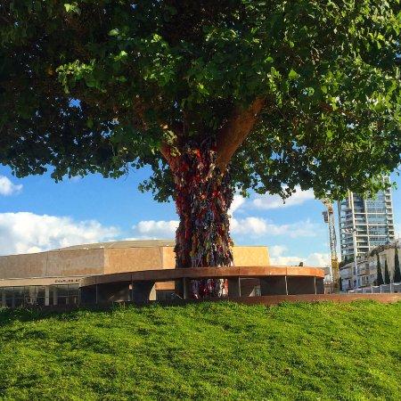 Habimah Square: העץ המפורסם של הכיכר לבוש סמורטוטים