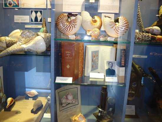 Musee des Coquillages: Витрины с экспонатами