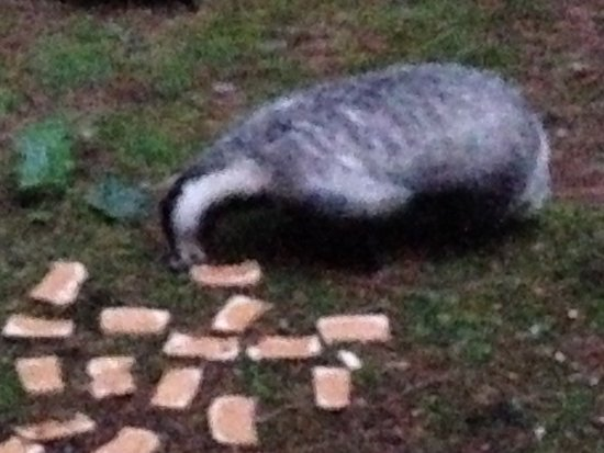 Flaxton, UK: Night time visitors love peanuts and peanut butter sandwiches!!!!